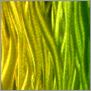 Yust metal art color color applegreen yellow